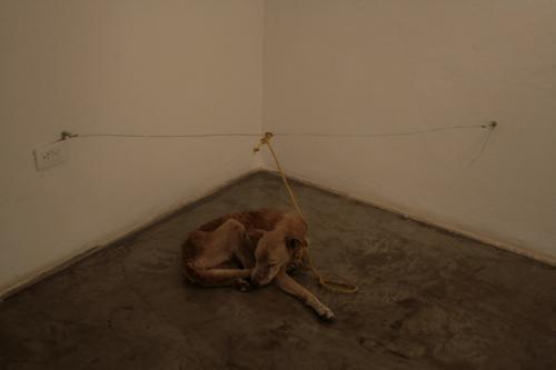 Δολοφόνος και σκυλιών και τέχνης